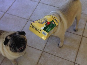 Beau in the butter box
